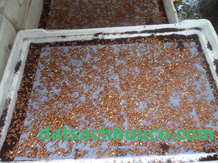 Cách gieo hạt rau mầm.  Đất sạch Namix