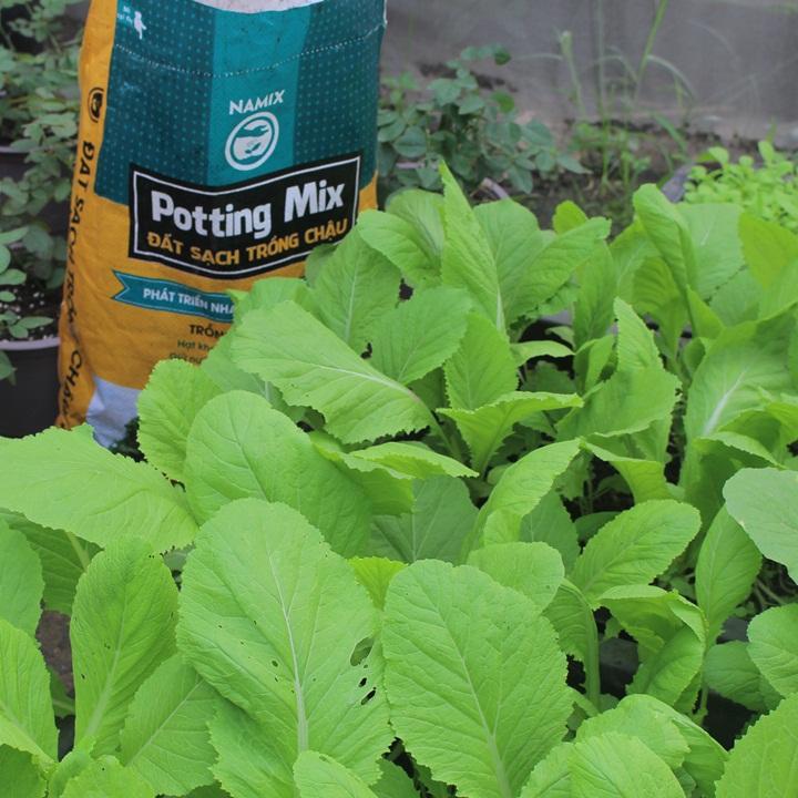 Bí quyết để trồng rau sạch, khỏe mạnh, tươi tốt