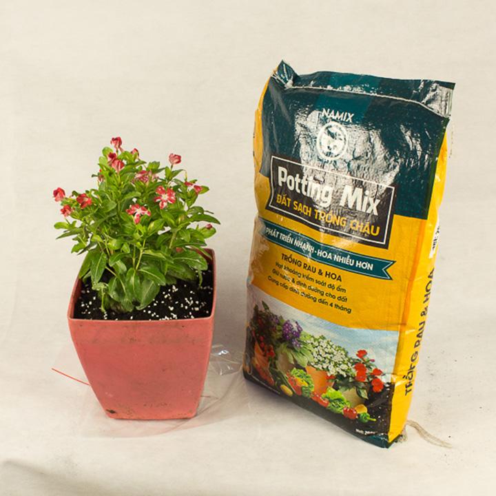 Sự khác biệt giữ đất vườn và đất chậu. Đất sạch trồng rau và hoa Namix