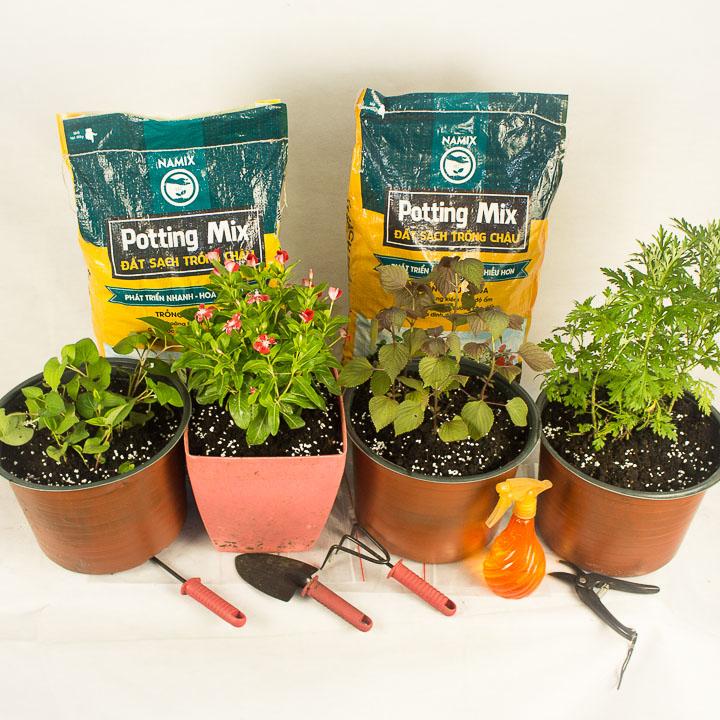 Sự khác biệt giữa đất sạch trồng chậu và đất sạch làm vườn, cách chọn đất sạch phù hợp