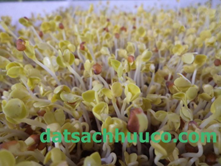 Cách trồng rau mầm đơn giản tại nhà với đất sạch Namix