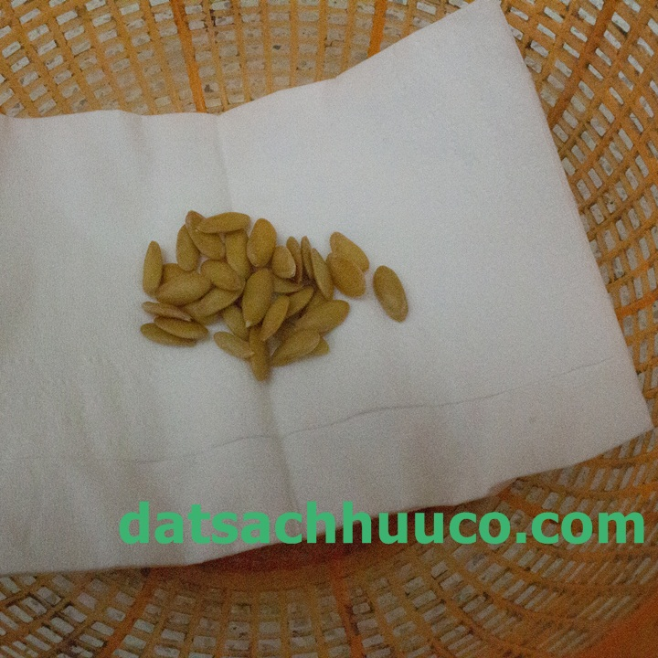 Cách ngâm ủ hạt giống. Đất sạch Namix trồng rau và hoa