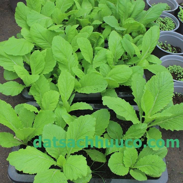 Đất sạch Namix phù hợp với nhiều loại cây trồng