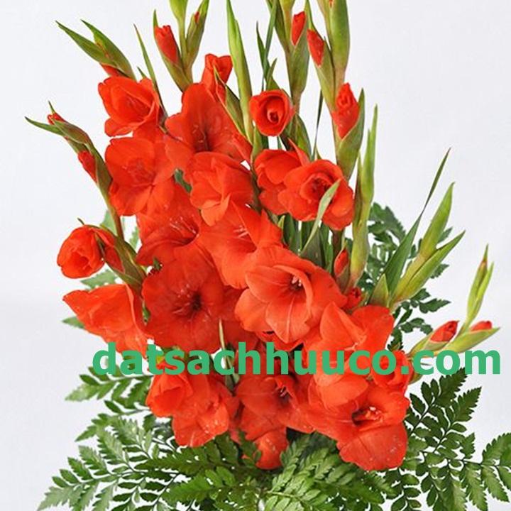 Hoa lay ơn. Kĩ thuật trồng hoa lay ơn. Đất sạch trồng hoa Namix