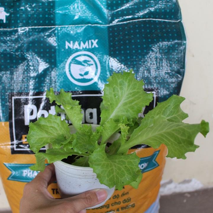 trồng rau tại nhà. Đất sạch trồng rau Namix
