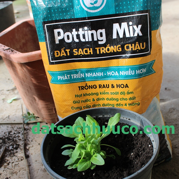 Đất sạch trồng hoa Namix. Đất trồng dạ yến thảo