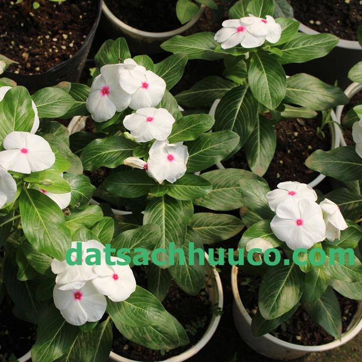 Vườn hoa trồng đất gì tốt?