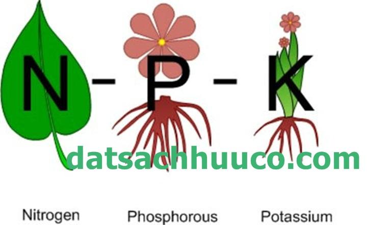 Vai trò của các nguyên tố khoáng đa lượng đến cây trồng