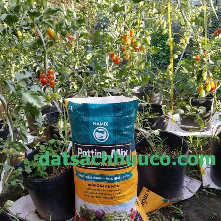 Kĩ thuật cắt tỉa cành và chăm sóc cây cà chua trồng chậu