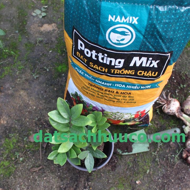 Cách trồng và chăm sóc cây kim tiền. Đất sạch trồng cây văn phòng Namix