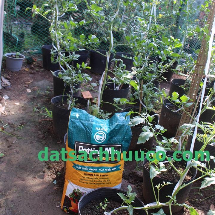 Đất sạch Namix trồng rau. Đất trồng cà chua bi