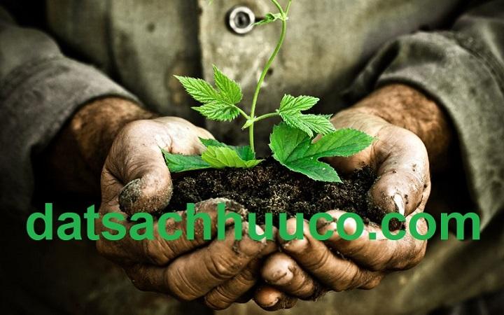 Đất Sạch Là Gì – Các Tiêu Chuẩn Của Đất Sạch…