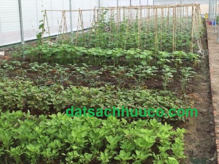 rau trồng theo mùa